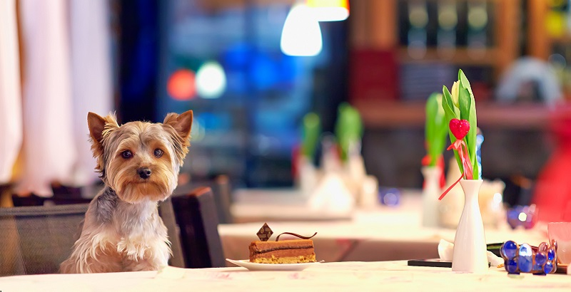 Dogs dinners: We reveal some of the UK's best dog-friendly restaurants